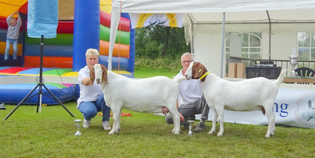 Kampioen boergeiten is Cleo B2 en reserve kampioen is Bleske B2. Beide geiten zijn van fam. den Braber.