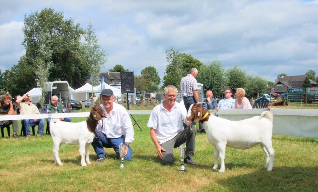 Boergeit lam kampioen Bleske B16 en reserve kampioen Famke 5 van de Kade Hoornaar 13 augustus 2