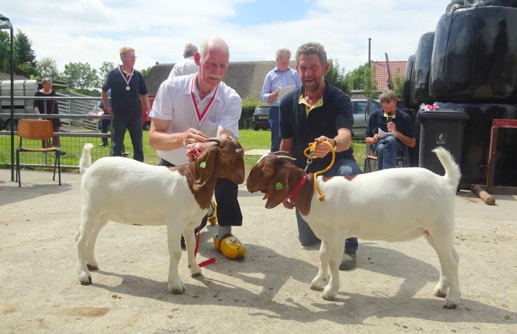 Kampioen boer lammeren is Monique W en reserve kampioen is Martine W. Beide lammeren zijn van P. Weessies.